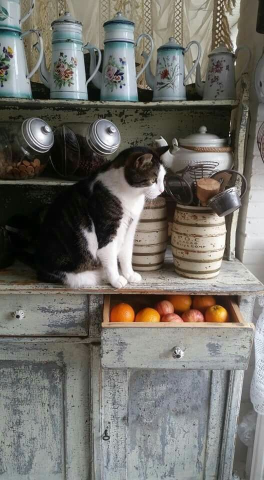 An old cupboard, enameled pots, and a sweet tabby...what else do you need?!