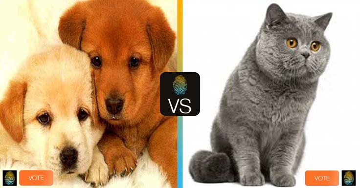 #dog or #cat ? #cane o #gatto? #animal #animals #pet #fun #funny #beautiful #animali Vote on #comparyson