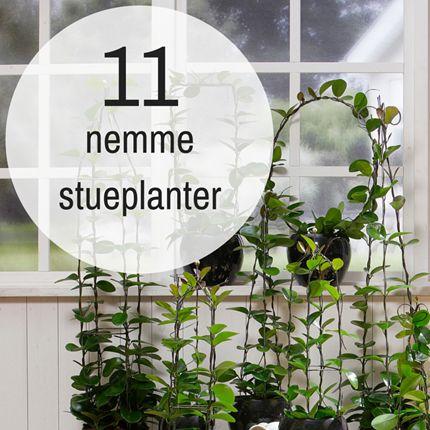 11 stueplanter der er nemme at passe - Plantorama