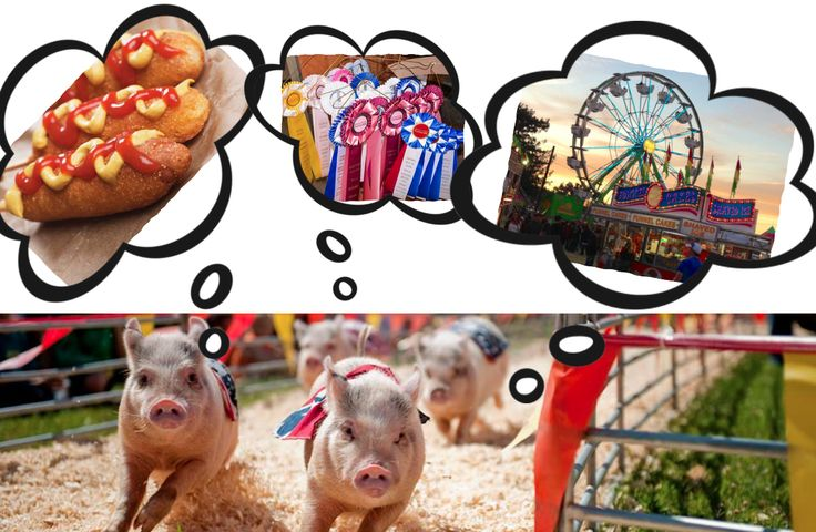 Ready to race over to the Sonoma-Marin Fair on tomorrow through June 25, 2017? Great concerts and unlimited carnival rides are included in the price of admission, and kids 3 and under are free! #SonomaFamilyShare #smf2017 #fairfun #fairanimals #carnival