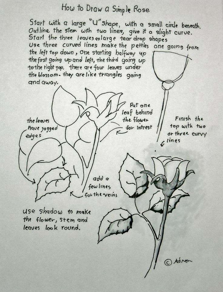 Scribble Drawing Technique : Images about painting roses patterns on pinterest