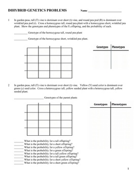 Genetics: Dihybrid Cross Worksheet