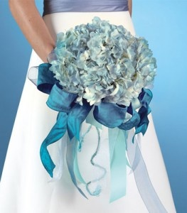 Hydrangeas are one of the very few flowers that come in blue!  Nice for the Brides maids and the table/church flowers.