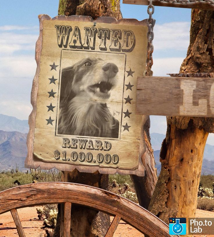 The 25+ best Wanted poster generator ideas on Pinterest Poster - free wanted poster template