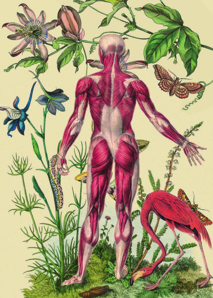 Anatomical collage art of Juan Gatti