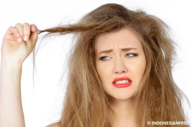 khasiat minyak zaitun untuk rambut. Memiliki rambut indah, hitam berkilau adalah impian setiap orang. Rambut adalah mahkotanya wanita. Rambut...