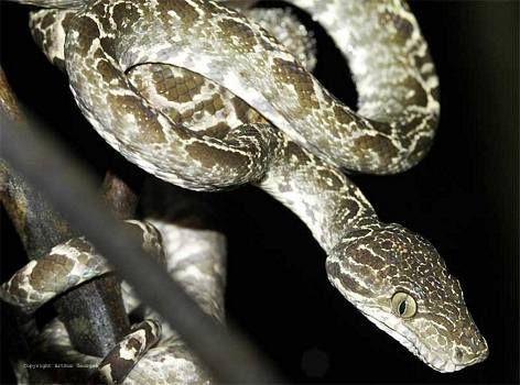 snakes of the tropical rainforests | Ecuador amazon rainforest pictures, Snakes in tropical rainforest