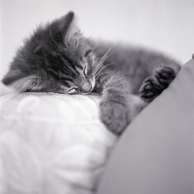 Grey kittens - Flickr: Search