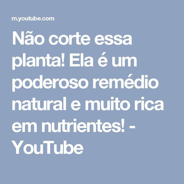 Não corte essa planta! Ela é um poderoso remédio natural e muito rica em nutrientes! - YouTube