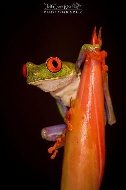 tree frog piss