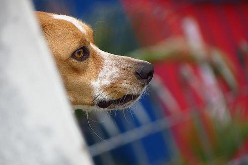 dog next door (II)