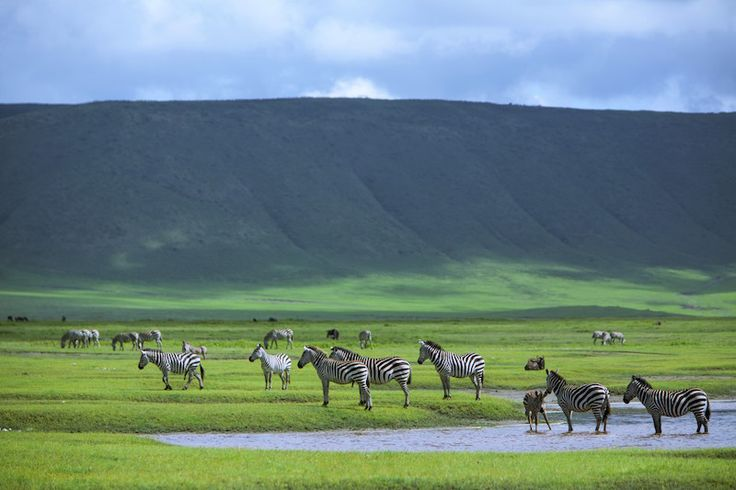 69 Best Images About Ngorongoro Reserve On Pinterest Africa Royalty Free Image And Flamingos