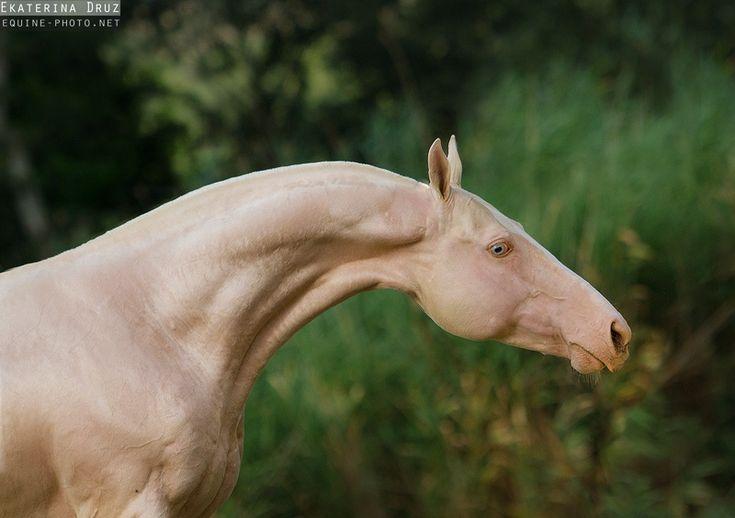 Horses & Books | theclassicalhorse:   Ekaterina Druz Horse...