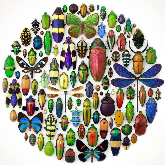 Lorsque l'on parle d'insectes, bon nombre d'entre nous ne pourront probablement pas en citer plus d'une dizaine, pourtant ils sont des centaines de milliers d'espèces qui peuplent la terre et les airs : parmi eux ceux qui sont tombés dans les filets de Christopher Marley.