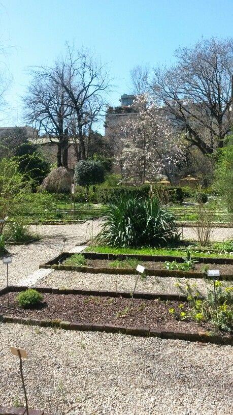 Orto botanico #spring #milan