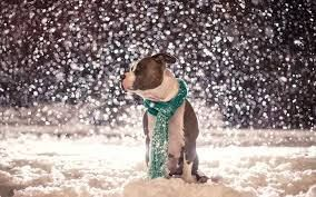 """NY ACC - Due to the recent inclement weather, there will be no """"at risk"""" list this evening, Tuesday, January 27, 2015, and no """"euthanasia"""" tomorrow, Wednesday, January 28, 2015 unless deemed medically necessary by a veterinarian."""