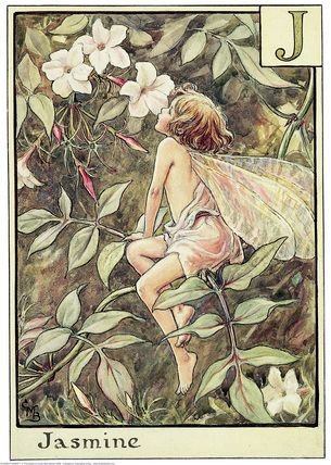 Illustration for the Jasmine Fairy from Flower Fairies of the Alphabet. A girl fairy sits on a frond of jasmine leaning towards to flower to smell it.  										   																										Author / Illustrator  								Cicely Mary Barker