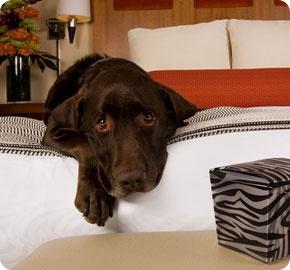 Dog At Pet Friendly Hotel Palomar San Francisco Ca