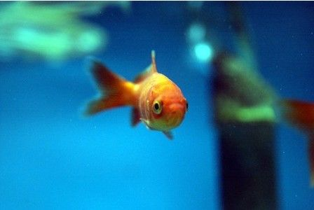 The signs of ageing can be 'magically' reversed by a common chemical used to clean fish tanks, according to a new study.    Methylene blue, a non toxic, water soluble and inexpensive chemical, also...