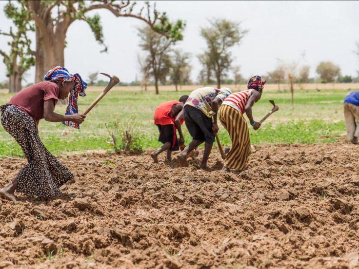 Moins de dioxyde de soufre aux Etats-Unis, plus de pluies au Sahel