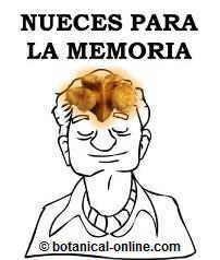 Nueces para la memoria