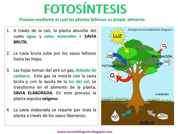 Escuela bloguera: Fotosíntesis/respiración de las plantas