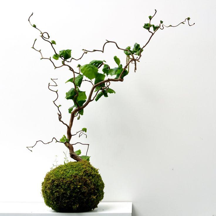 112 best kokedamas paris les jardins suspendus d. Black Bedroom Furniture Sets. Home Design Ideas