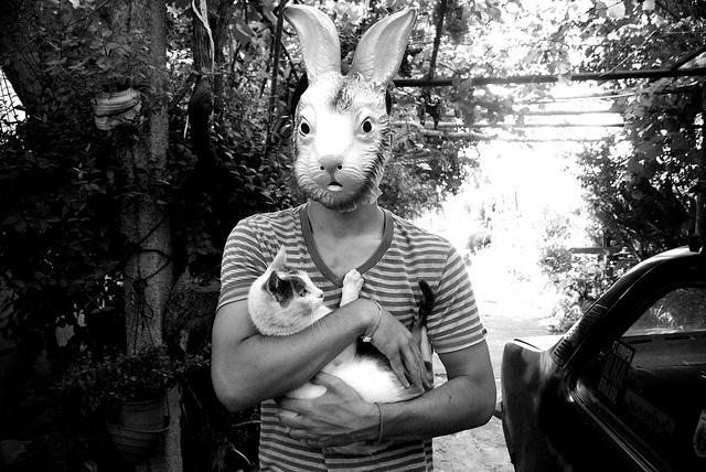 Rabbit and cat <3