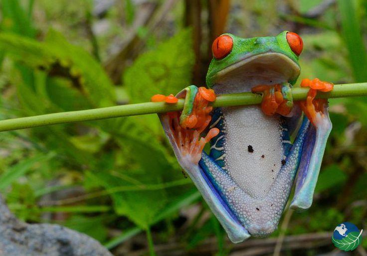 Cahuita National Park in Limon, Costa Rica