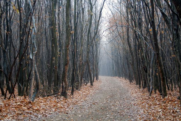 Hoia Baciu Forest, Romania | The 19 Most Unnerving Spots On Earth. The Hoia Baciu Forest is known as the Bermuda Triangle of Romania. The forest is complete with legends of missing people, electronic devices that spontaneously stop working, and UFO sightings.