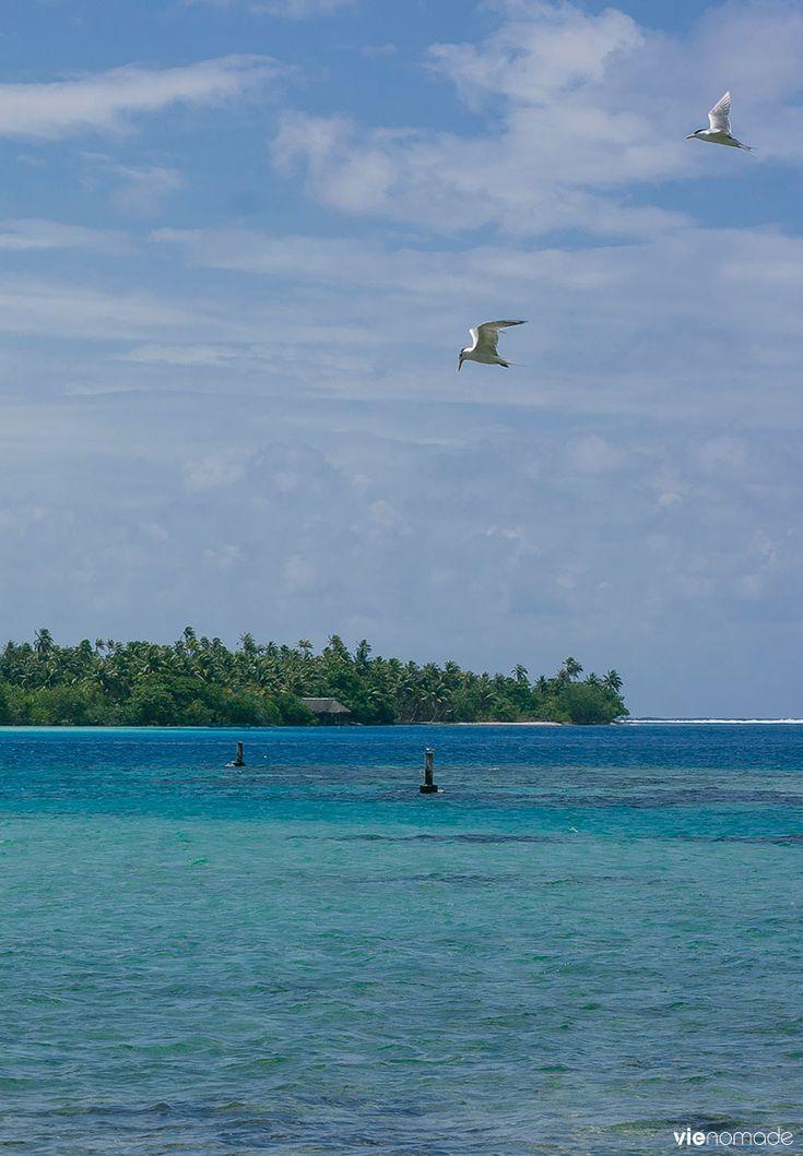 Huahine, Polynésie Française #huahine #polynésie #polynesiefrancaise #voyage #ile #croisière .