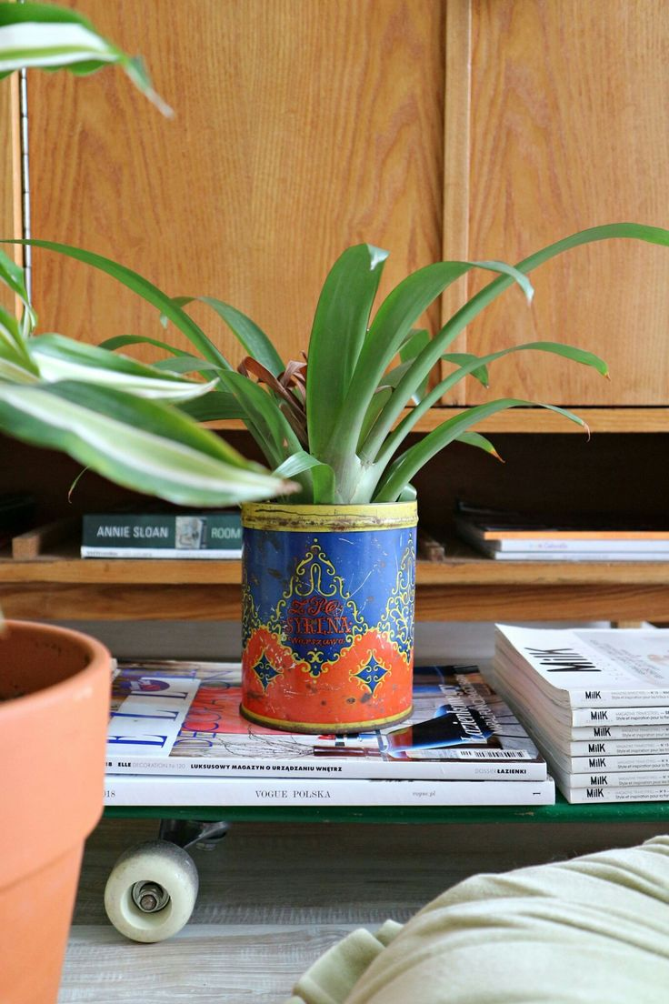 Vintage can as a pot for plant