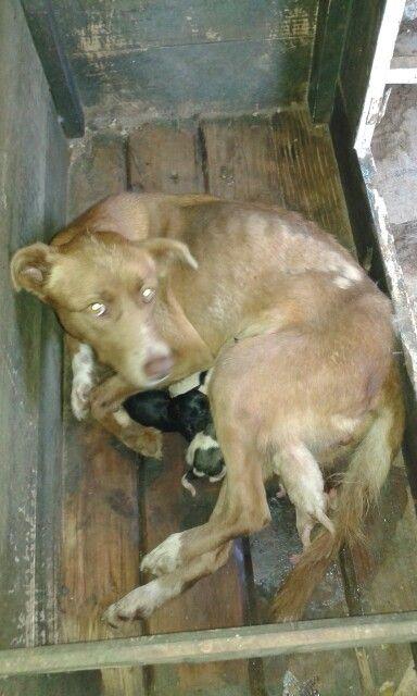 Que tierno mi #perrita benni acaba de ser #mamá y el papa es mi #perro coockie que lindos son los #cachorros #dog ❤♒