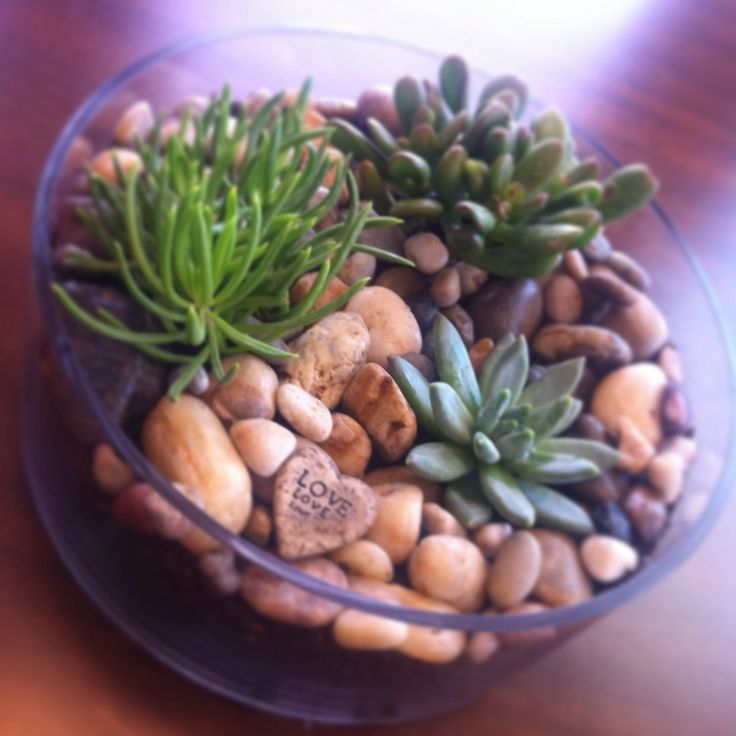 DIY Open Terrarium! Stones on the bottom for drainage. 70/30 mix of soil and sand. Succulents from Lowe's garden dept. Decorative stones on top. Water lightly every 7-10 days (when soil is dry to the touch).