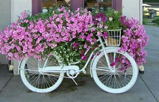 Pretty flowers on a bike#