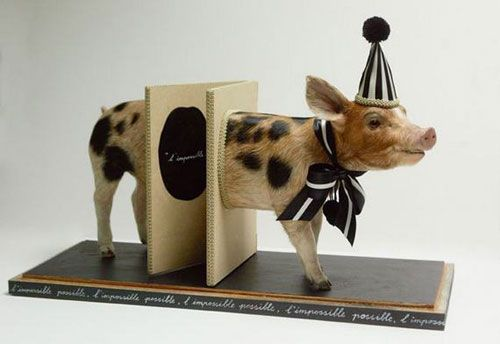 piggy taxidermy | Animales disecados (Taxidermia bizarra)!
