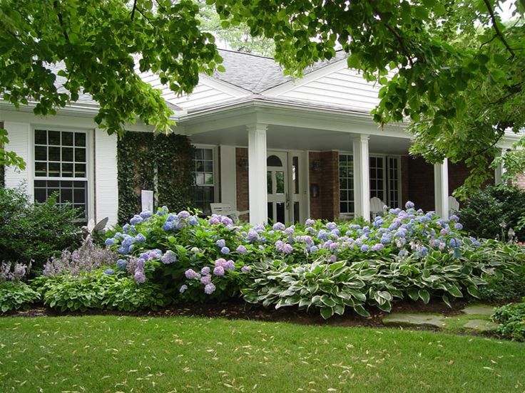 25 best images about hostas and on pinterest gardens for Garden designs with hydrangeas