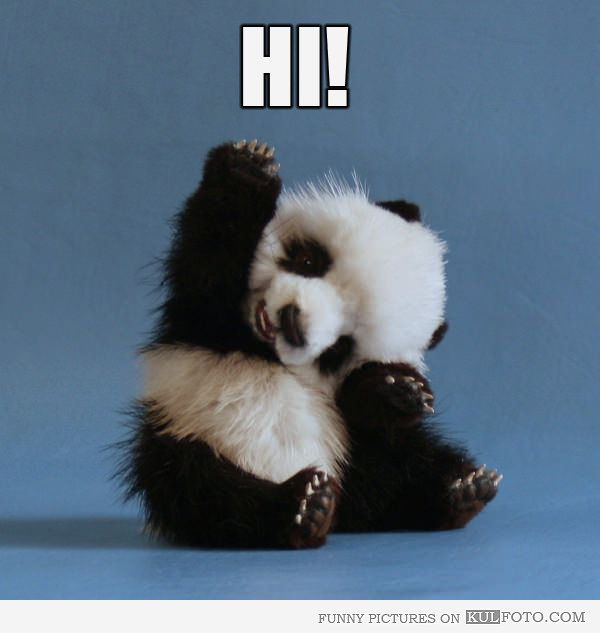 "Hi! - Funny panda toy looks very cute saying ""hi!"" 