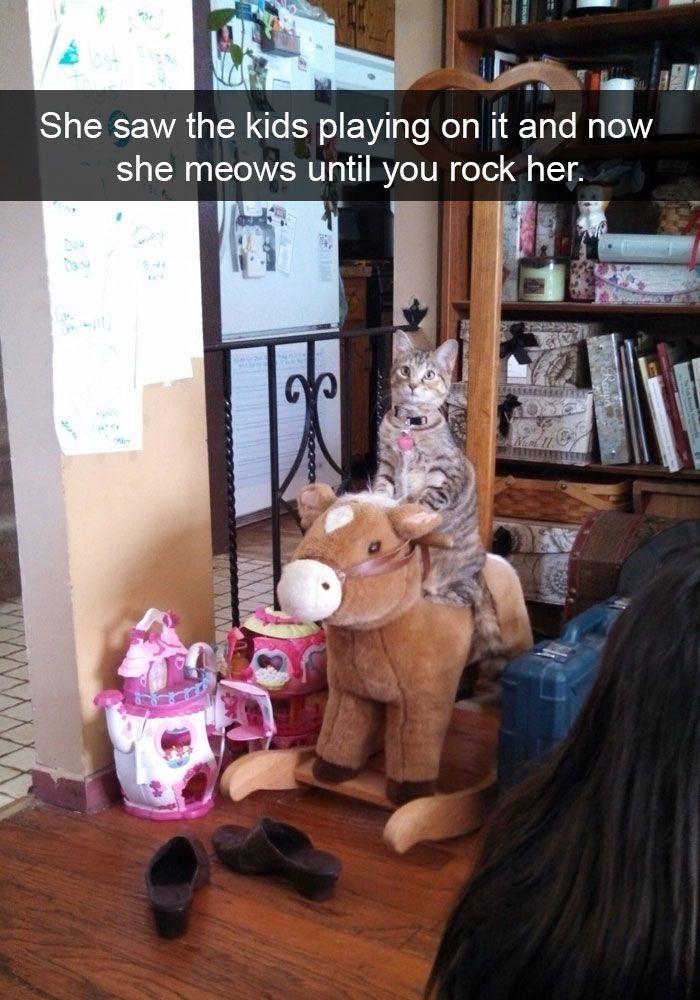 Les chats sont une source insatiable de divertissement. Ce sont des branleurs, des connards et pensent secrètement à nous exterminer tous. Mais ils ont cette qualité unique : ils nous font toujours ma