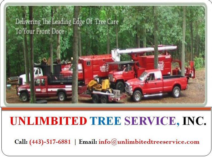 https://flic.kr/p/UViMeq | Expert Tree Removal Maryland, MD | Follow Us : tree-trimming-columbia.tumblr.com  Follow Us : tree-removal-annapolis.tumblr.com  Follow Us : unlimbitedtreeservice.tumblr.com  Follow Us : storm-damage-columbia.tumblr.com  Follow Us : tree-service-bowie.tumblr.com  Follow Us : tree-removal-catonsville.tumblr.com  Follow Us : tree-trimming-millersville.tumblr.com
