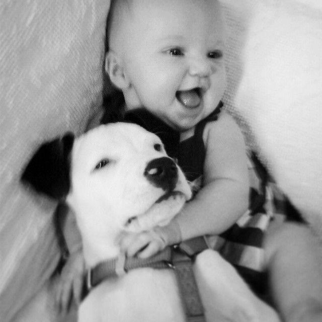 Eisleigh és Clyde  Pitbullok és gyerekek? - Hírek  #eisleighandclyde #pitbull #kutya #dog #baby #cute #kutyabaráthelyek #kutyabarathelyek