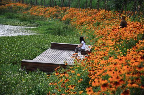 restored wetland - Google Search