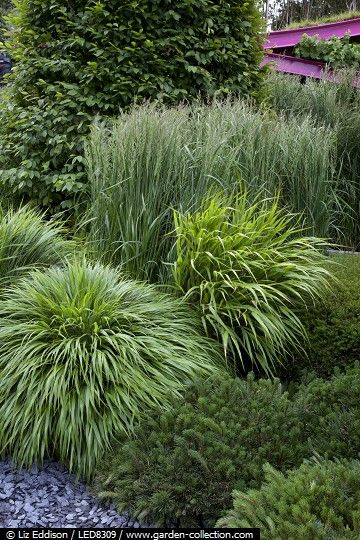 144 besten gartengestaltung bilder auf pinterest for Modern ornamental grasses