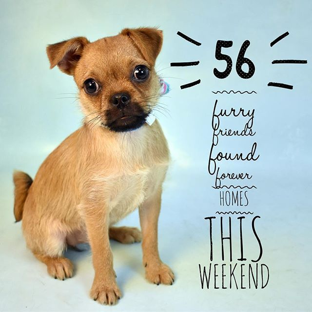 How Paw Some Is This Over 50 Animals Found Homes This Weekend