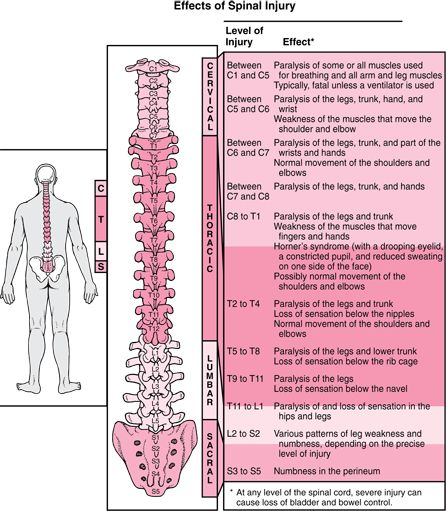 Quick Reference: Effects of Spinal Injuries