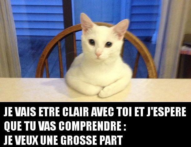 Quand un chat à très faim et qu'il se met à table, c'est qu'il a quelque chose à vous demander.