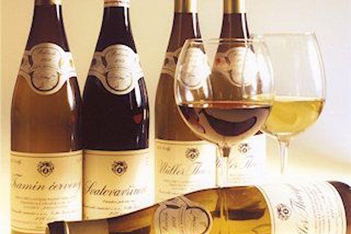 - Žernosecké vinařství - prohlídka dobových sudů a ochutnávka vín