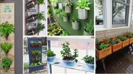 herb-garden-praktic-ideas-all