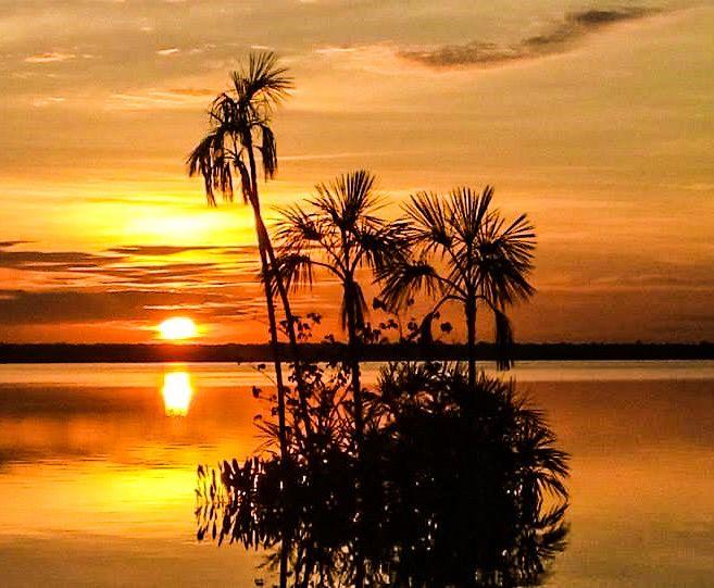 Conheça a maior ilha fluvial do planeta, a Ilha do Bananal. Saiba o que fazer por lá: