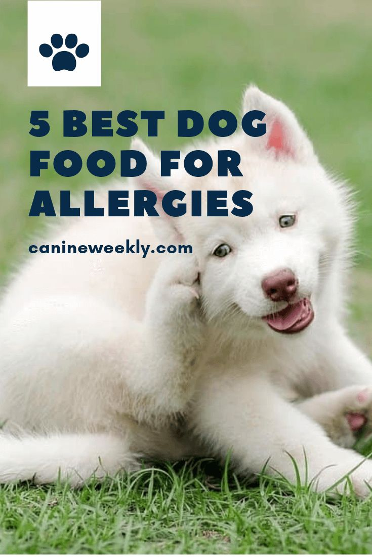 7 best hypoallergenic dog food for allergies 2021 canine